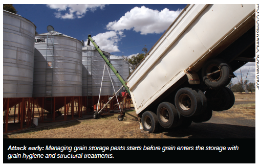 Attack early: Managing grain storage pests starts before grain enters the storage with grain hygiene and structural treatments.