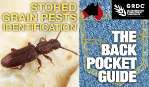 Grain Storage Pests