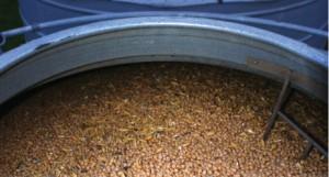Grain Storage chicpea silo