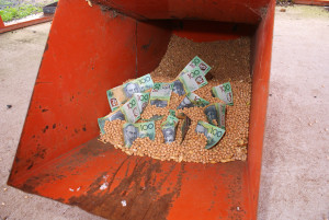 Grain Storage Money in hopper