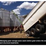 Grain Storage pest attack
