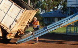 Grain Storage pest management