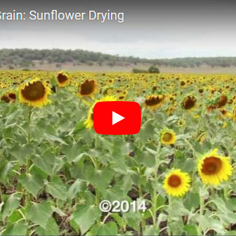 Stored Grain Sunflower video