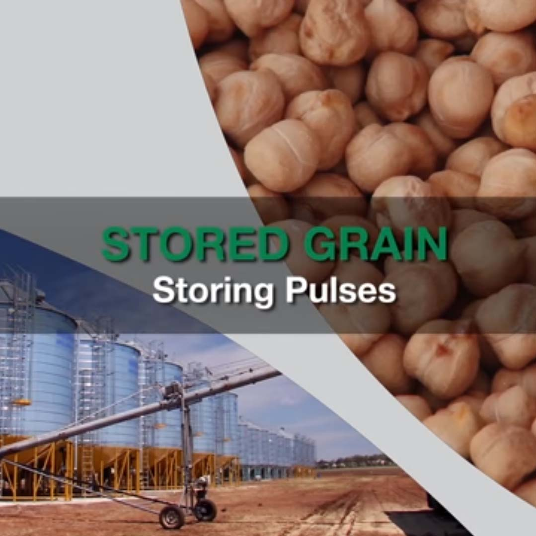 Stored Grain Pulses video