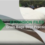 Stored Grain bags