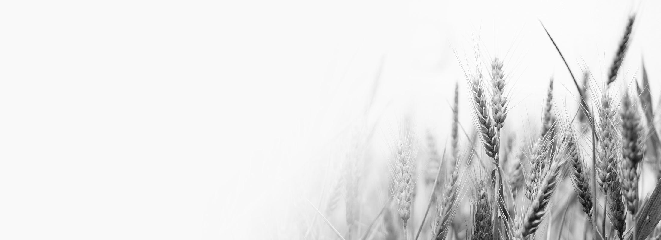Farming Grain